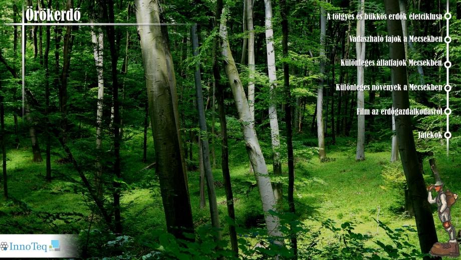 Örök erdő kezdőoldal